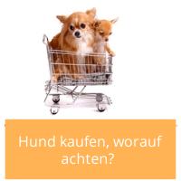 Artikelbild_Hund_kaufen