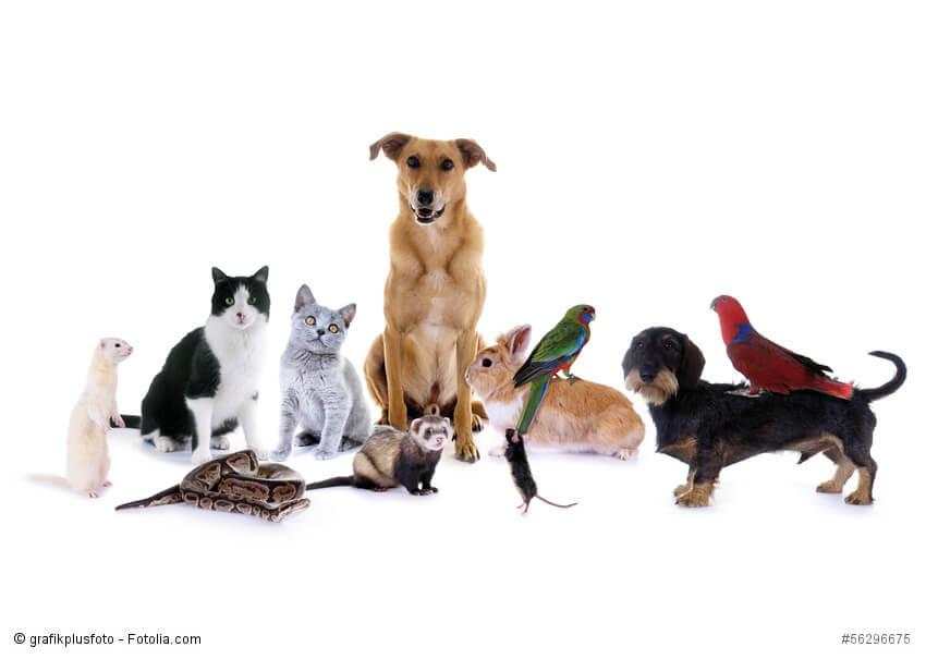 Bild mit verschiedenen Haustieren Hunden, Katzen, Vögeln, Nagetieren