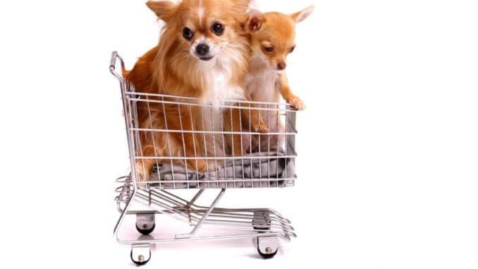 Hund Kaufen Was Ist Zu Beachten Woran Solltest Du Denken