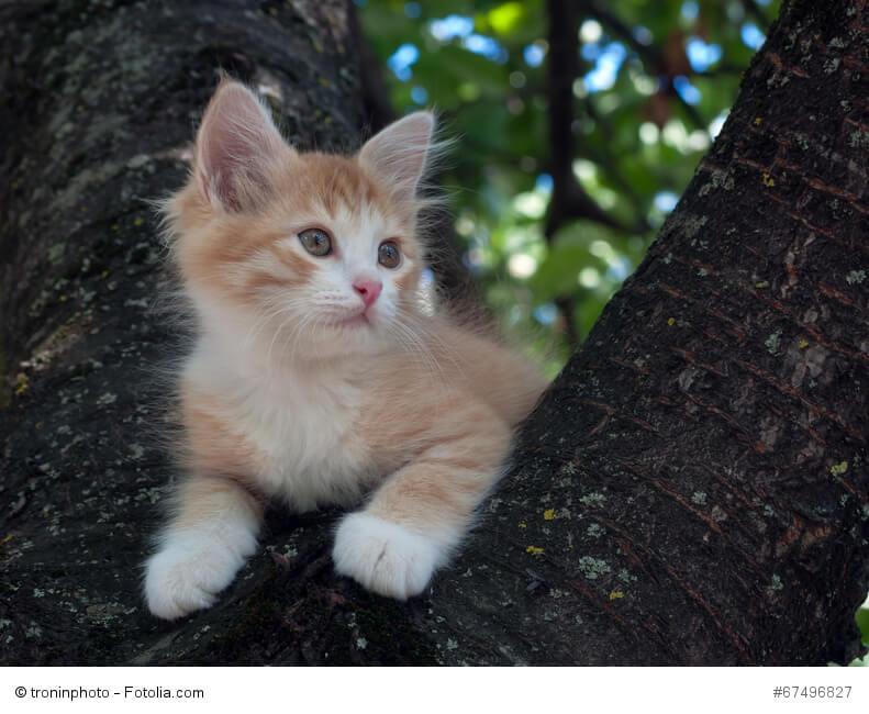 Eine junge Katze sitzt auf einem Baum