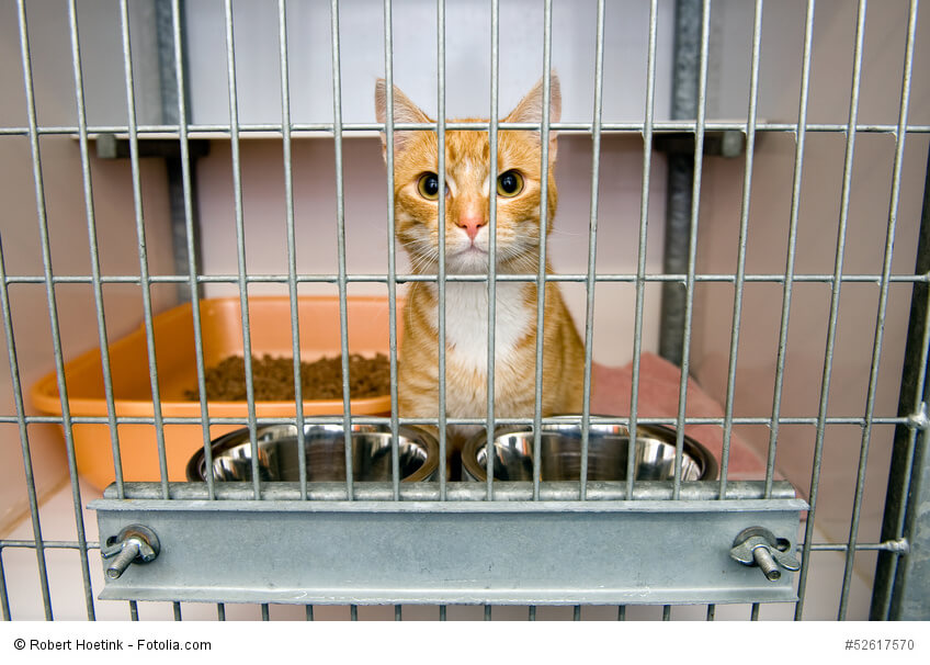 Eine rotgetigerte Katze in einem Käfig in einem Tierheim