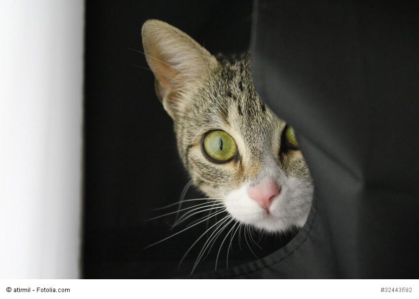 Eine Katze schaut aus ihrem Versteck