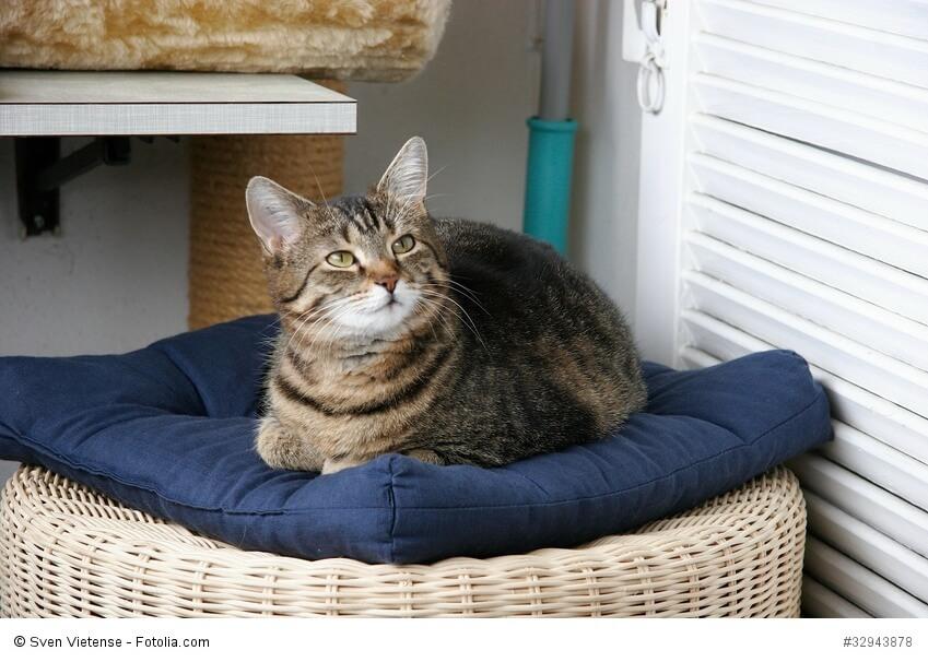 So könnte es deiner Katze in einer Tierpension gehen.