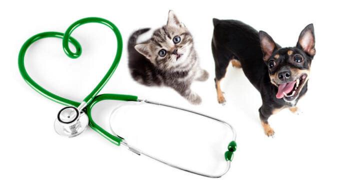 Ein Stethoskop bildet ein Herz neben dem eine Katze und ein Hund sitzen