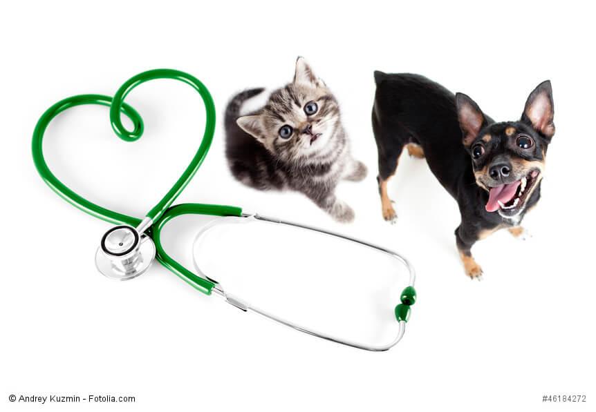 Gesundheit hund katze