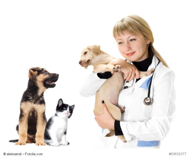 Eine Tierärztin hält einen Welpen im Arm daneben sitzen ein anderer Welpe und eine kleine Katze.