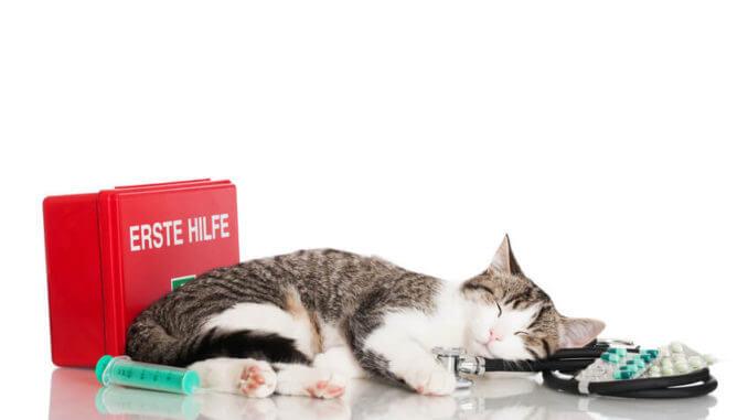 Katze mit Erste-Hilfe-Kasten