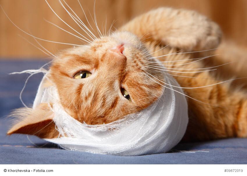 Katze mit einem Kopfverband