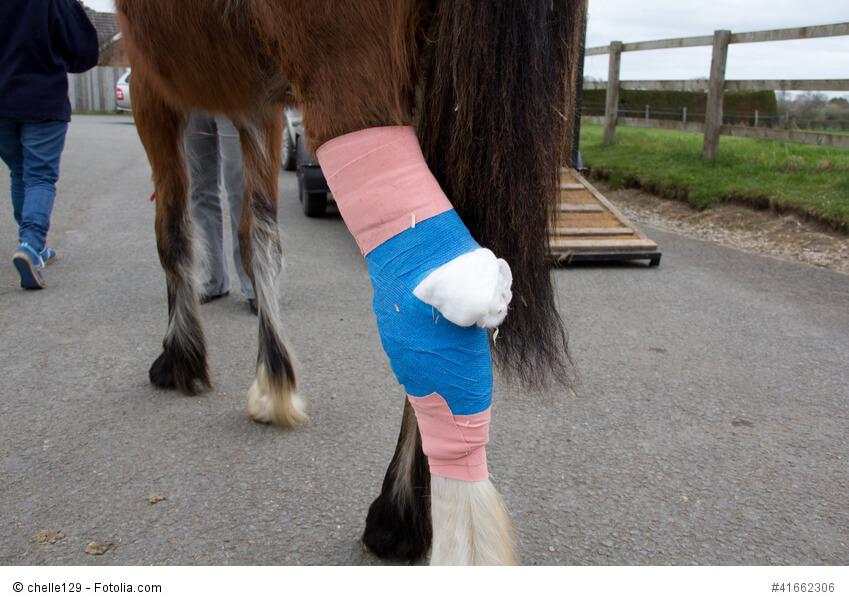 Ein Pferd mit verbundenem Bein.