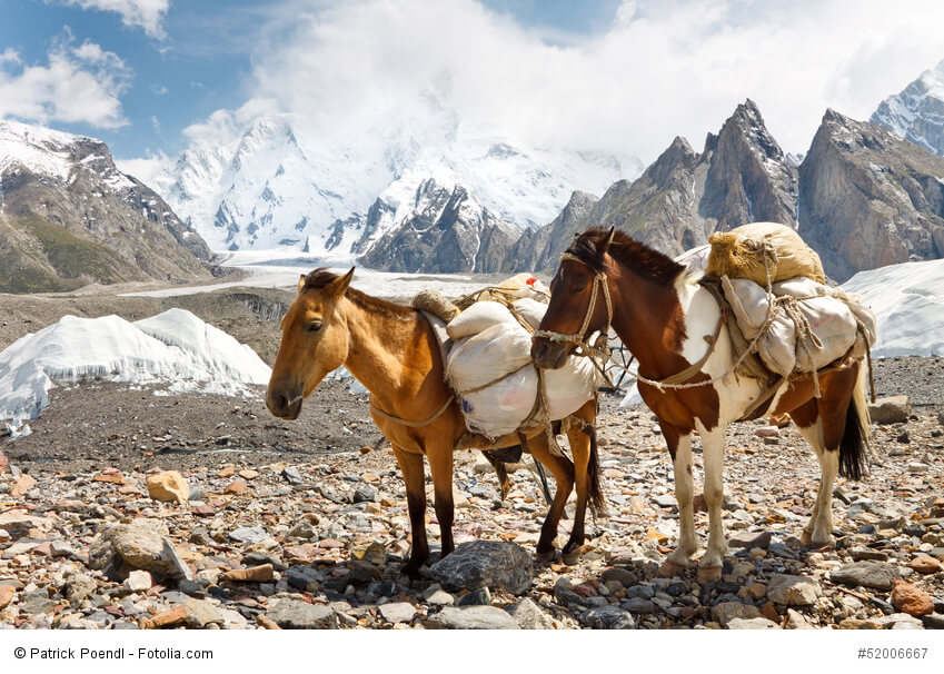Packpferde in Karakorum, Pakistan