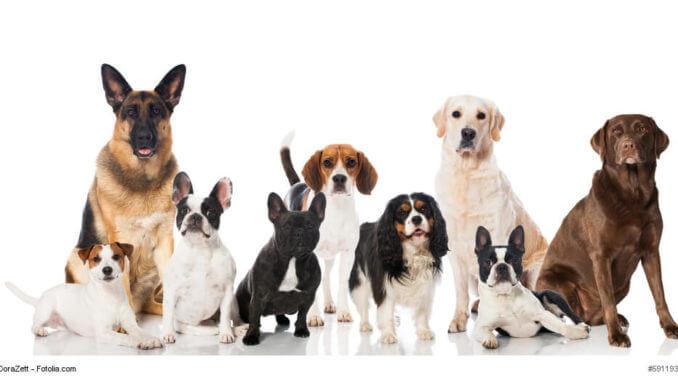 Verschiedene Hunderassen, sitzend vor einem weißen Hintergrund