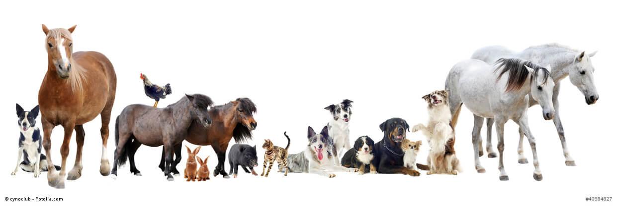 Tierversicherung die tierkrankenversicherung