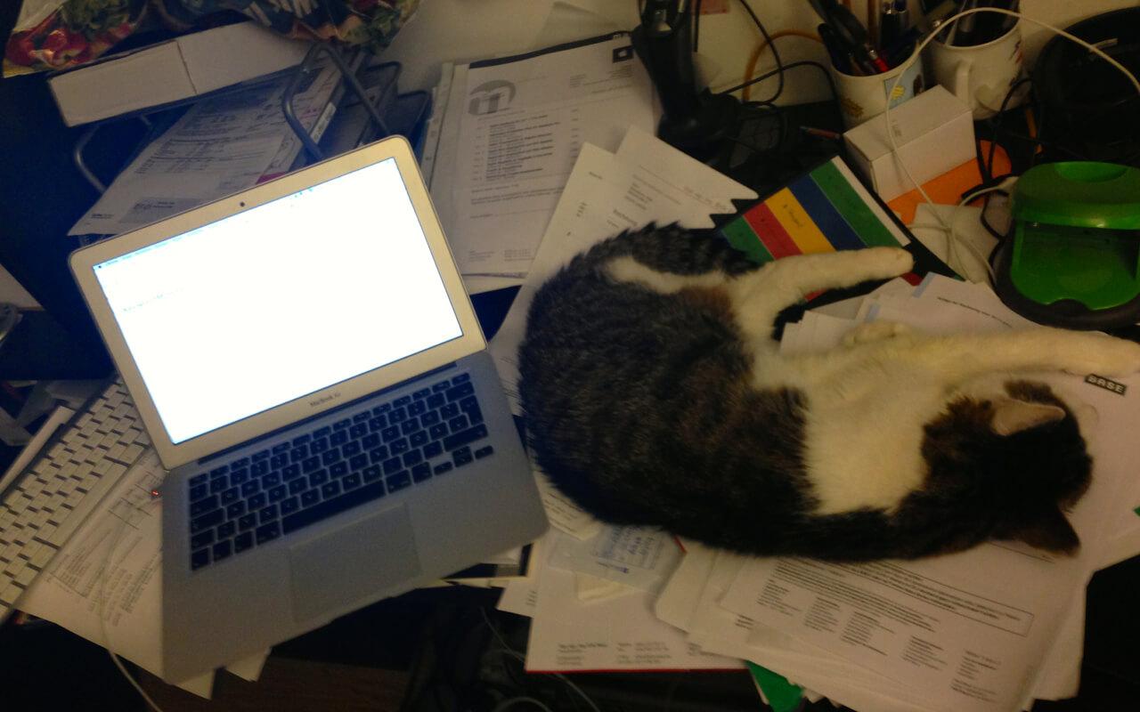 Ein Kater schläft auf einem Berg Papieren auf einem Schreibtisch mit einem Laptop
