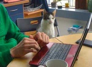 Ein Kater sitzt auf einem Stuhl neben einem Mensch, der an einem Laptop arbeitet