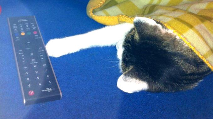 eine Katze liegt mit der Pfote auf einer Fernbedienung auf einem blauen Sofa