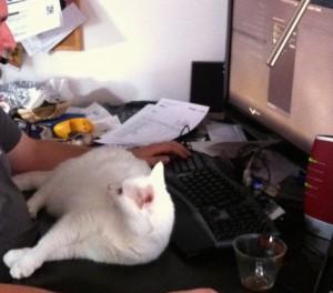 Ein weißer Kater liegt vor einer schwarzen Tastatur vor einem Computermonitor