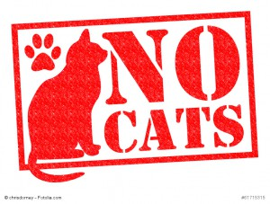 Schild mit einer gemalten Katze und der Aufschrift no cats