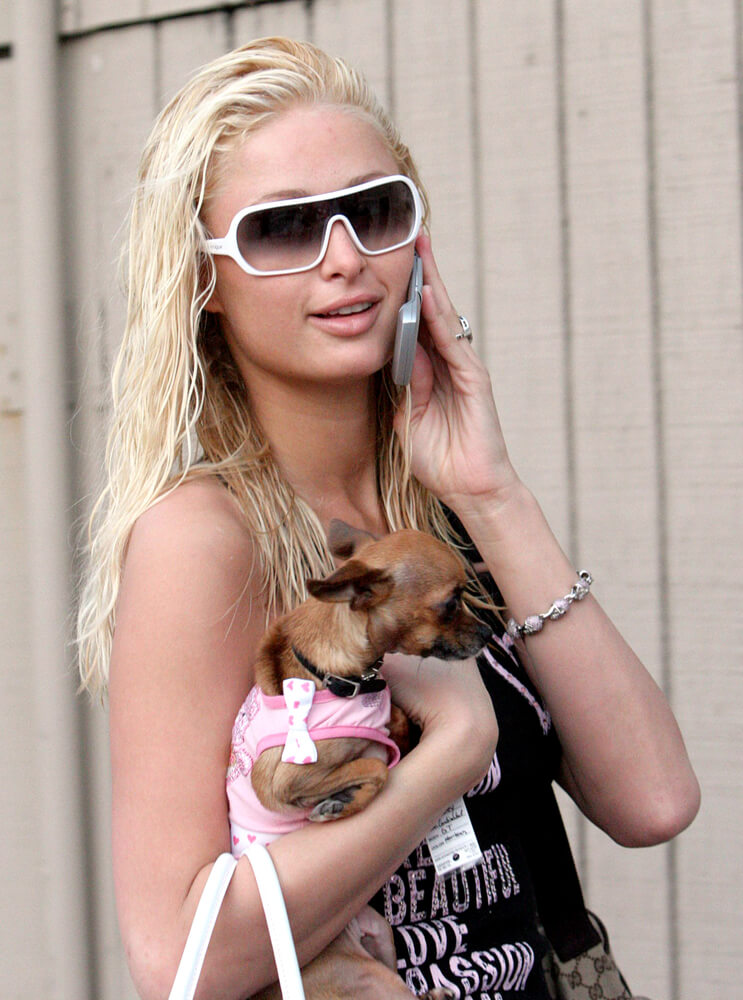 Paris Hilton mit ihrem Chihuahua Tinkerbell