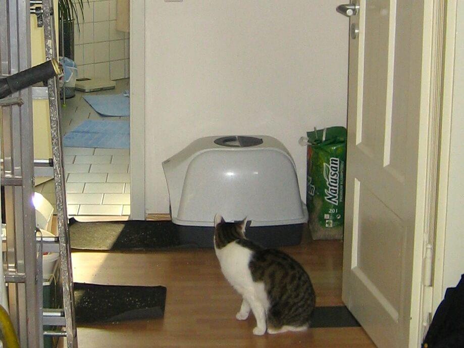 Eine Katze sitzt vor einem Katzenklo auf einem Flur