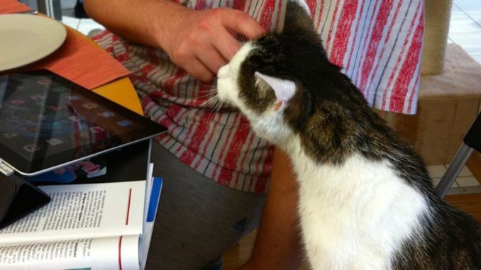 Eine Katze beäugt interessiert ein iPad