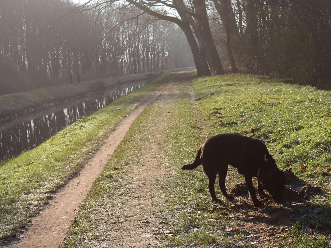 Ein Hund schnüffelt am Wegesrand