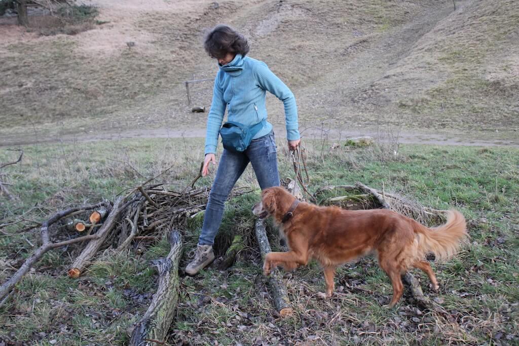 Brauner Hund läuft mit Frauchen an der Leine über verschiedene Baumstämme und Äste um die Koordination zu trainieren