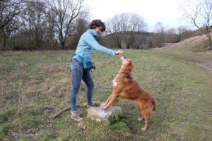 Hund steht mit den Vorderbeinen auf einem Stein und Frauchen hält ein Leckerchen mit Abstand über den Hund. Damit der Hund das Leckerchen erreicht, muss er sich strecken.
