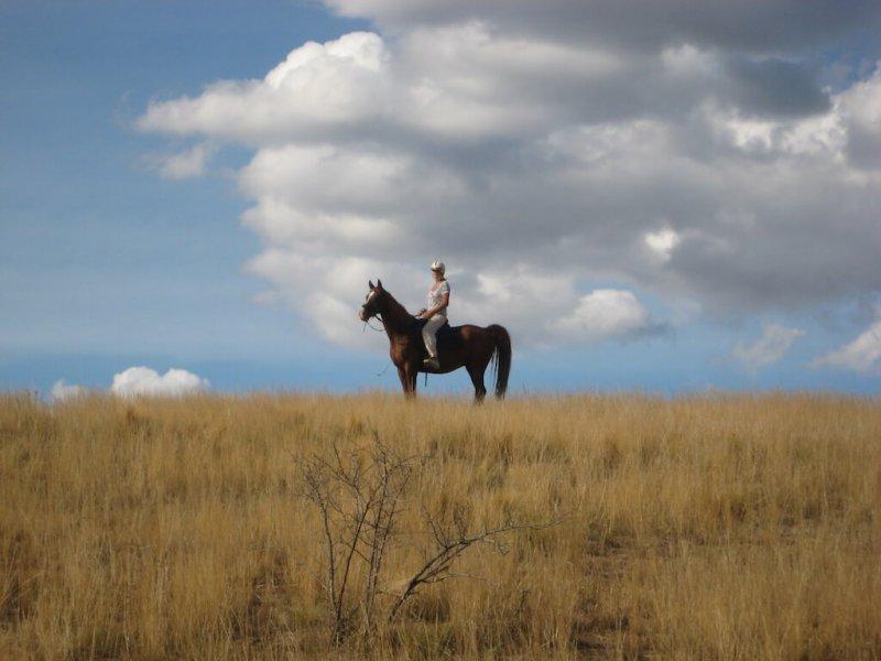 American-Saddlebred-Reiterin
