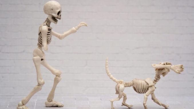 Ein Hundeskelett läuft mit einem Unterarm in der Schnauze vor einem Menschenskelett mit fehlendem Unterarm davon