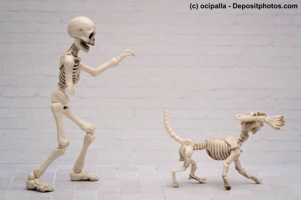 Anatomie vom Hund: Skelett, Muskulatur, Gebiss | Haustiermagazin