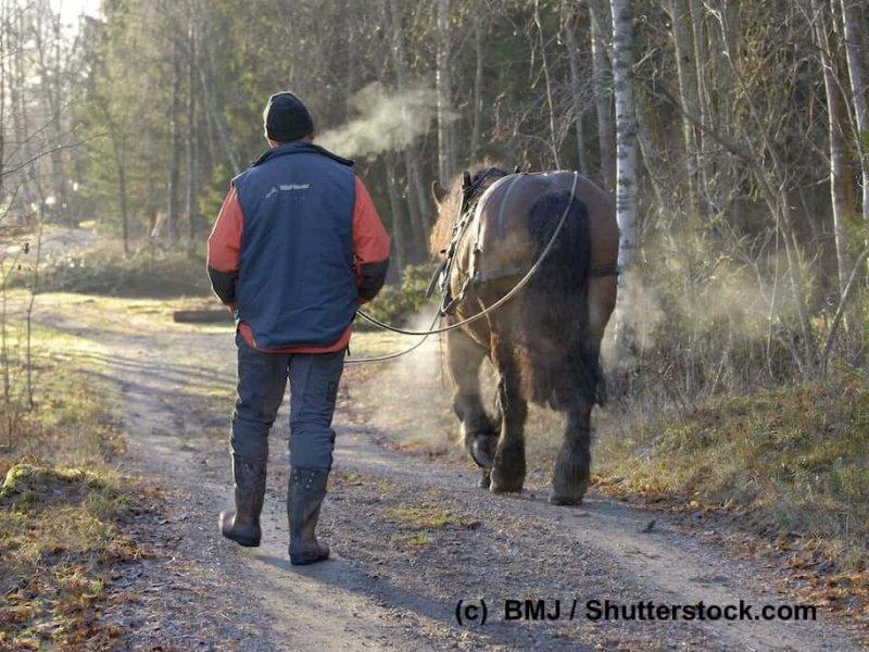 Ardenner bei der Waldarbeit