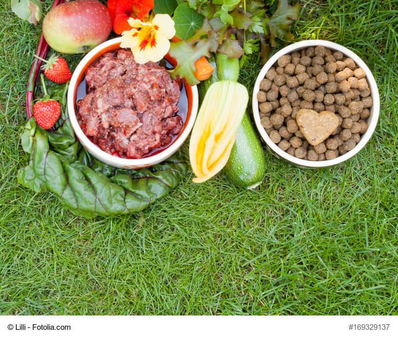 Verschiedene Hundefutter Sorten und frisches Fleisch umringt von Gemüsesorten