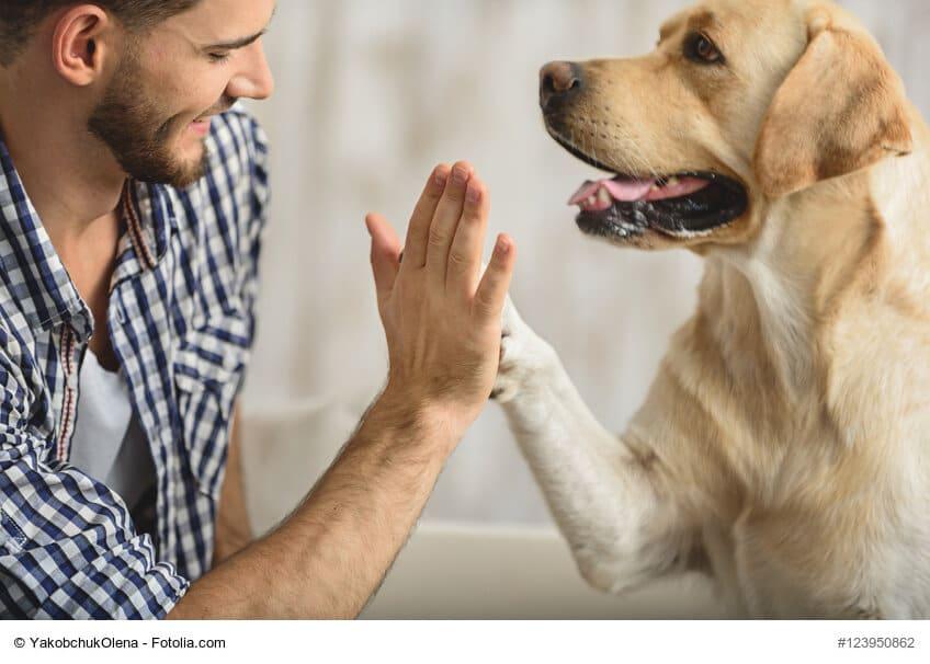 Mann und Hund geben sich die Hand/Pfote