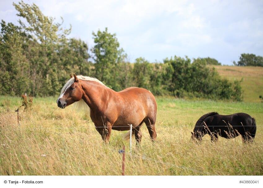 Rundes Pferd bedeutet nicht gleich dickes Pferd