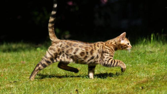 Kaufratgeber: Die besten GPS-Tracker für Katzen – für mehr Sicherheit für deine Mieze