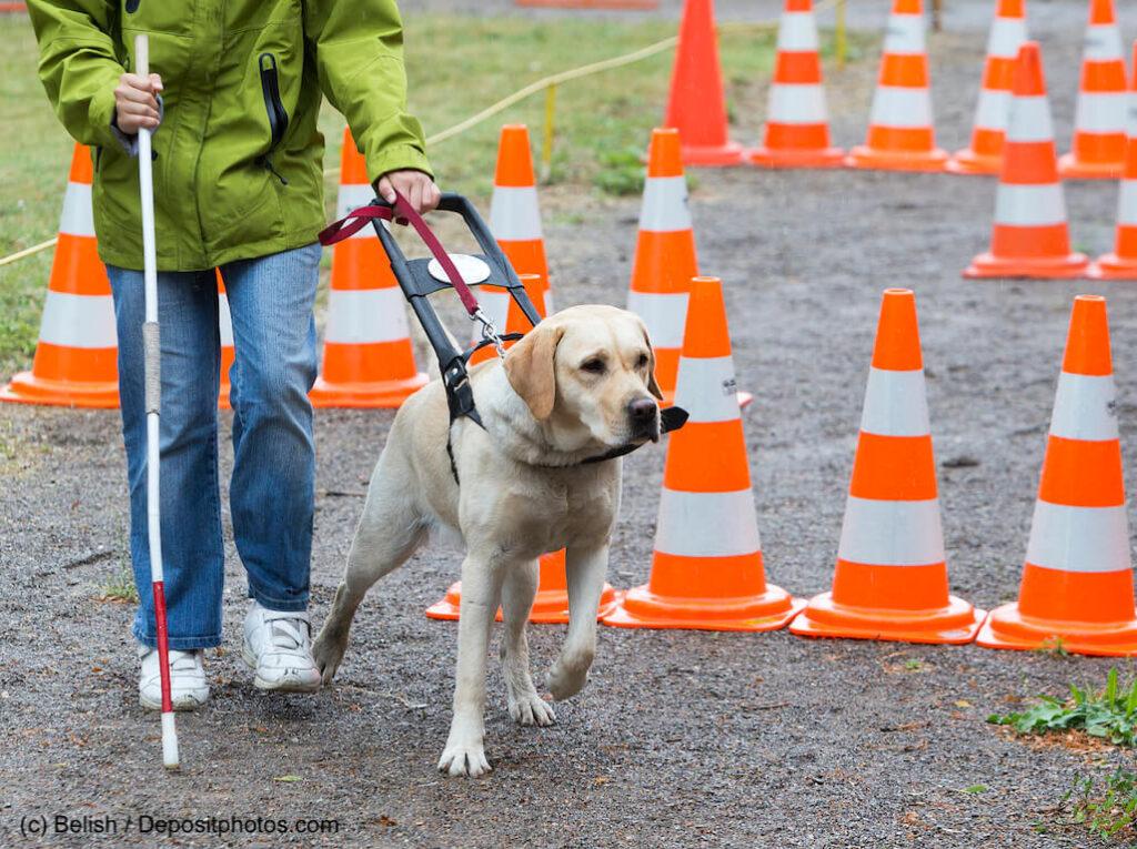 Blinder Mensch mit ihrem Blindenhund