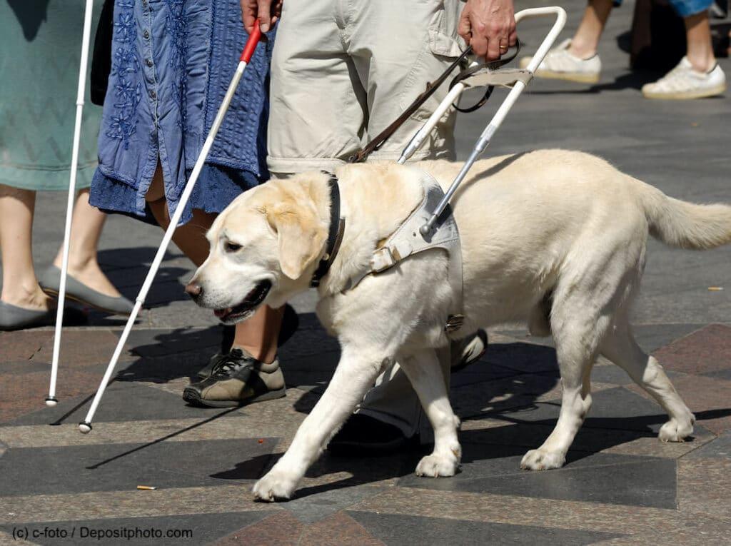 Blindenhund in der Stadt