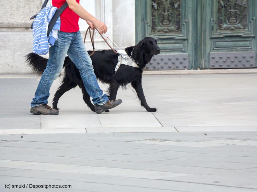 Blindenhund hilft blindem Mann in der Stadt
