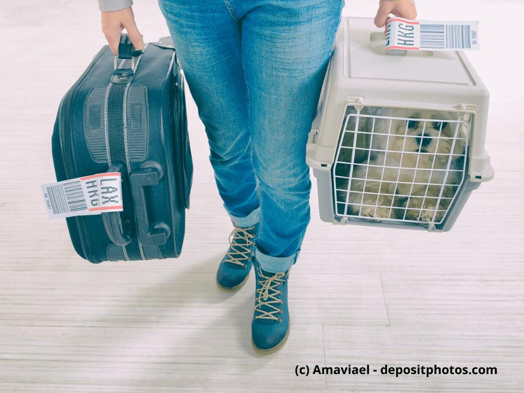 Kleiner Hund im Cargo-Carrier der Fluggesellschaft, am Flughafen nach einer langen Reise
