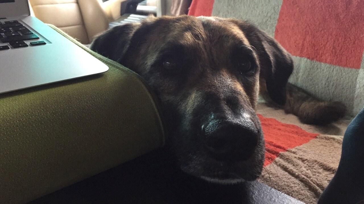 Ein Hund hat seinen Kopf auf einem Tisch abgelegt neben einem grünen Laptopkissen mit aufgeklapptem Laptop