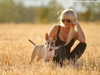 Bullterrier Welpe mit seinem Frauchen auf einem Stoppelfeld