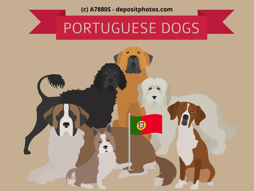 Cão Fila de São Miguel, Rafeiro do Alentejo, Cão da Serra de Estrela Steckbrief