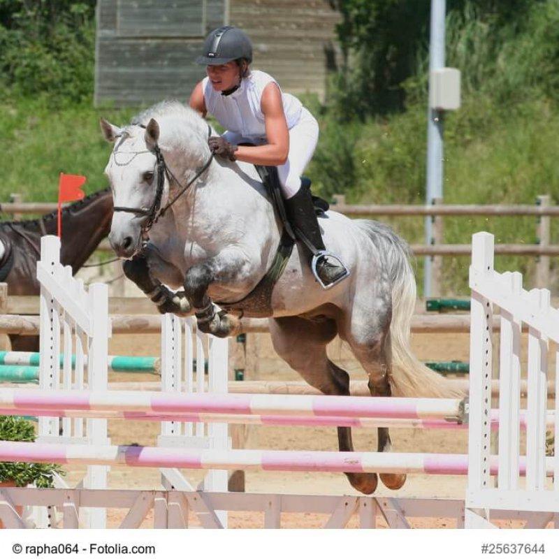 Connemara-Pony im Sprung