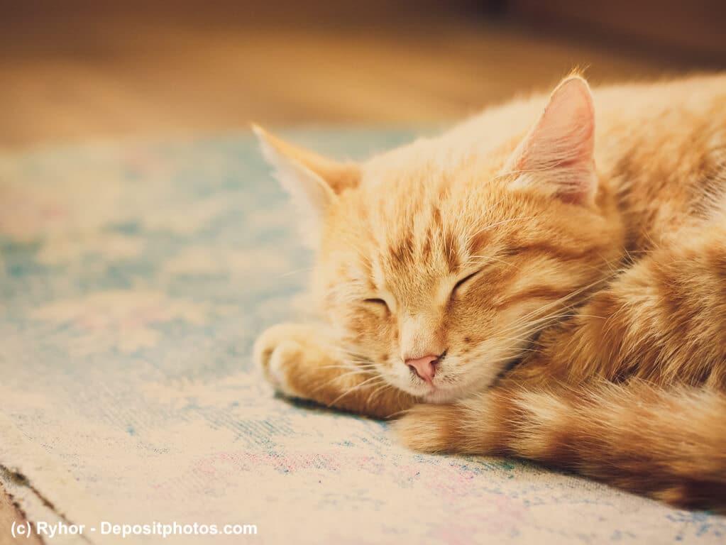 Würmer Hunde Katzen können zu Trägheit und Erschöpfung führen