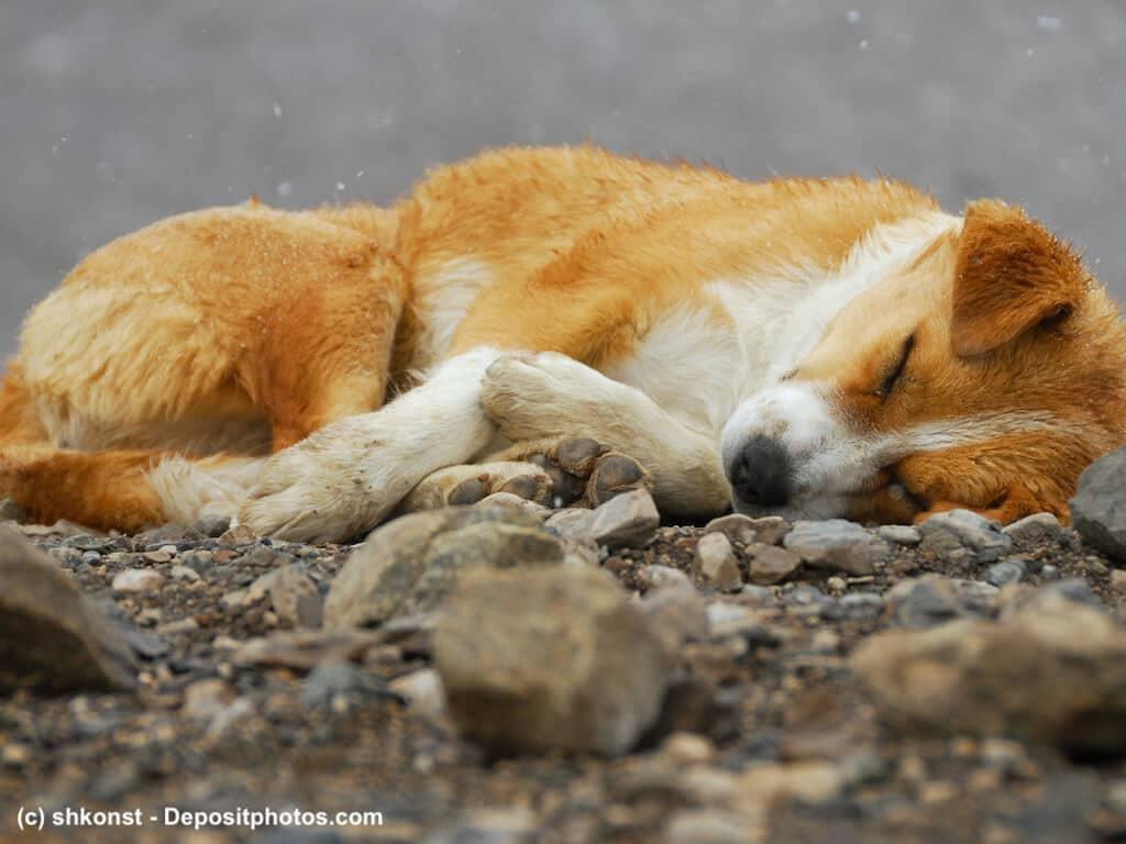 Hygiene bei Wurmbefall deines Hundes