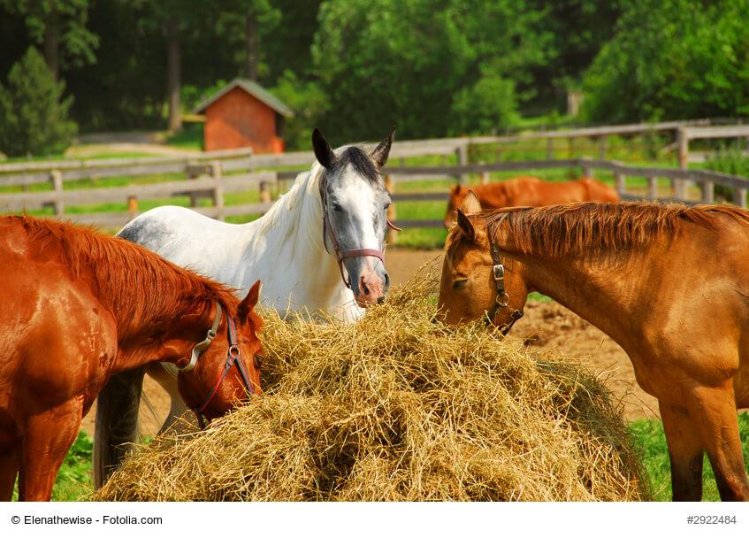 Jeses Pferd hat ganz individuelle Bedürfnisse