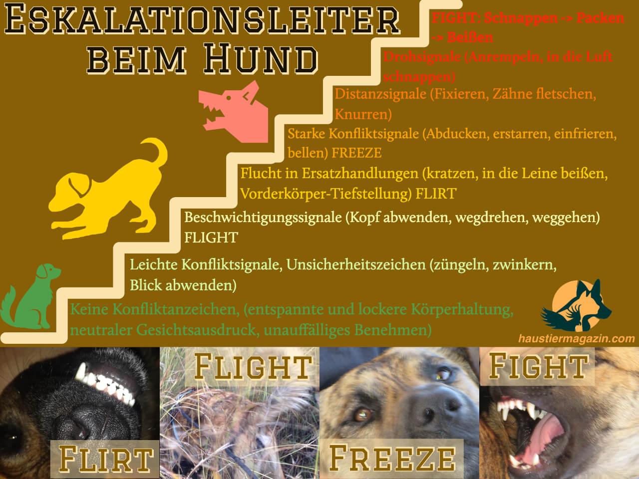 Infografik zur Eskalationsleiter beim Hund mit Meideverhalten, Konfliktzeichen, Aggressionsanzeichen