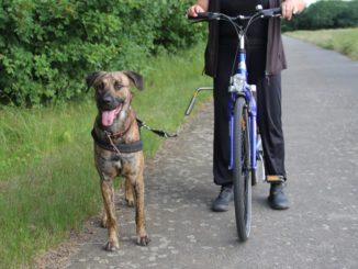 Neben einem Fahrrad steht ein Hund