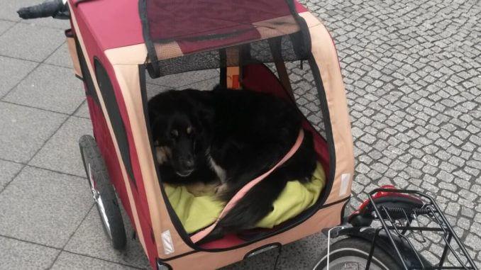 Hundefahrradanhänger FAH18-2 von Leopet hinter einem Fahrrad mit Hund