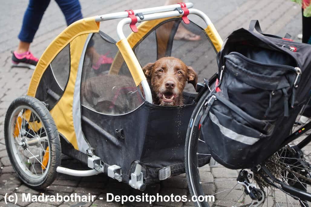 Hund liegt im Fahrradanhänger